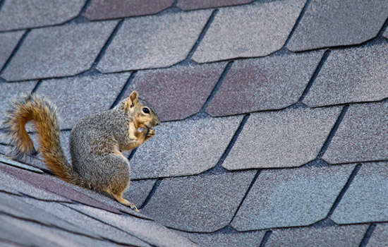 animal proof your roof