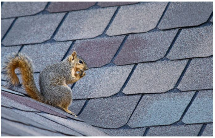 The Soffit and Fascia: Some Tips Critters Don't Want You to Know
